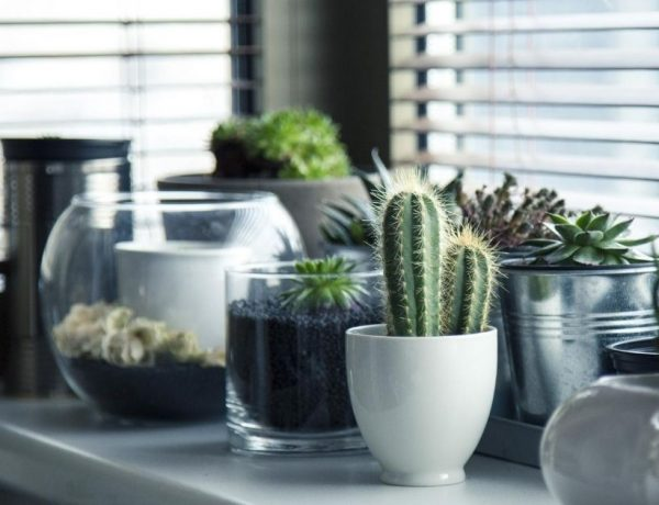 Succulents: Best low-maintenance indoor plants