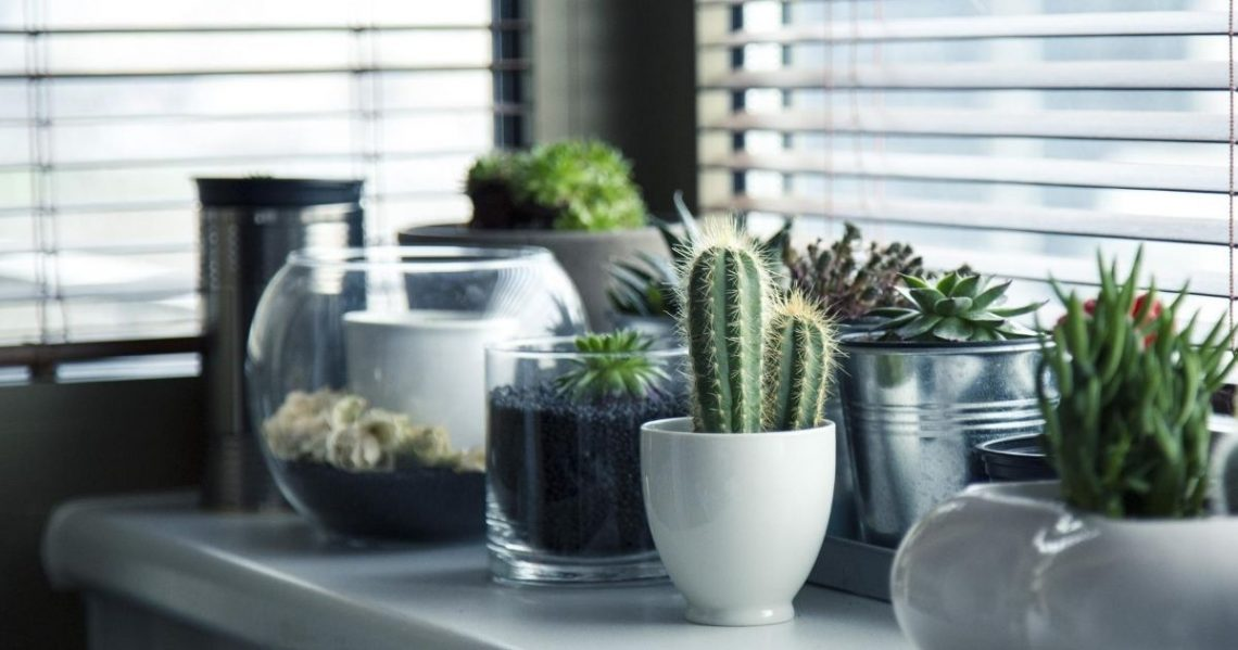 Succulents: Best low-maintenance indoor plants